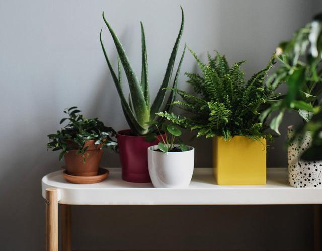 Zimmerpflanzen Test Vergleich
