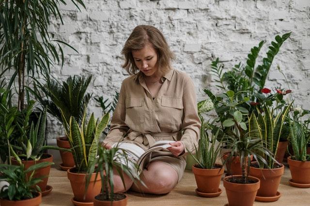Zimmerpflanzen gegen Elektrosmog